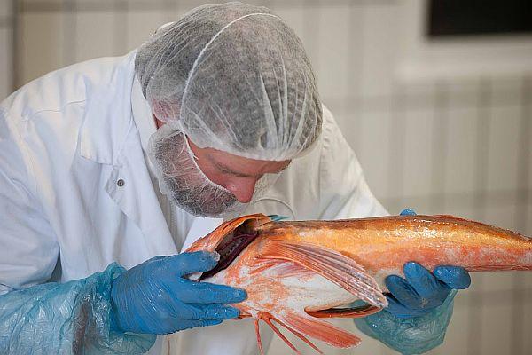 Viele Fische datieren Website anmelden