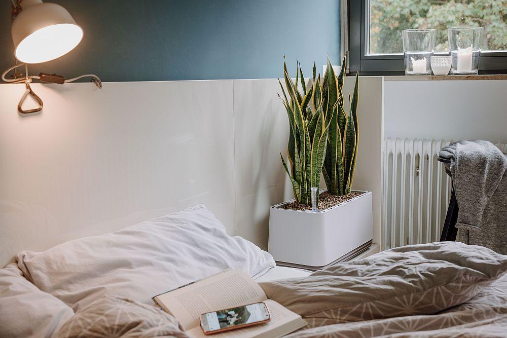 Im Schlafzimmer kann AIRY mit dem nachtaktiven Bogenhanf wertvolle Dienste leisten. (Foto: AIRY)