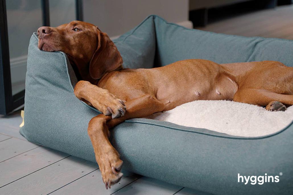 Ein Hundeleben kann auch ganz schön bequem sein.
